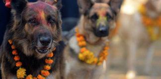 Nepal dedica un día entero para venerar a los perros en un festival
