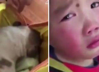 Niña lloró porque su maestra descubrió a un perro sin hogar en su mochila