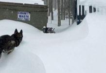 Pastor alemán rescata a una pitbull atrapada en la nieve