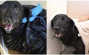 Perra abandonada en un refugio envuelta en una bolsa