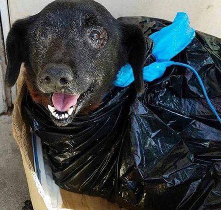 Perra envuelta en una bolsa de basura
