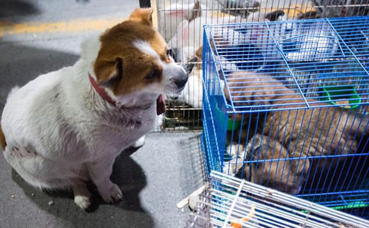 Perra lucha para que no vendan a sus cachorros