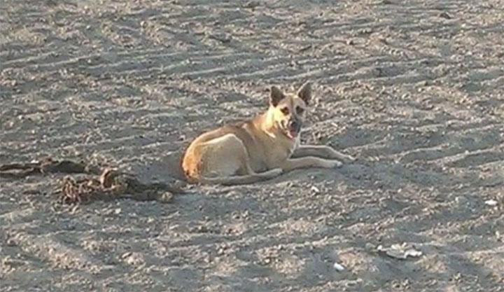 Perra permaneció al lado de su amiga que murió atropellada
