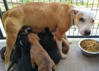 Perra viajaba 2 millas cada día para alimentar a sus cachorros