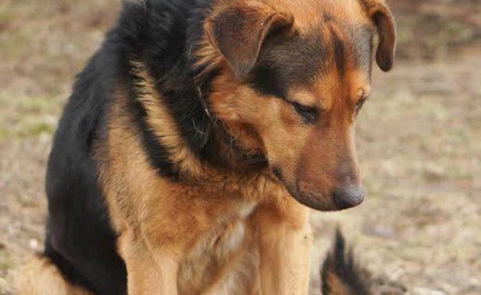 Perro abandonado esperó siete días al lado de la carretera