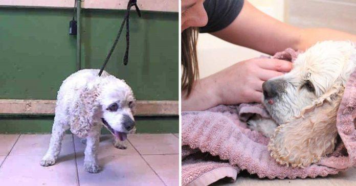 Perro de 20 años fue abandonado en un refugio por ser demasiado viejo