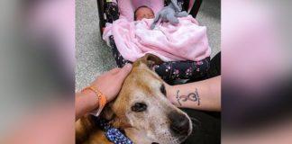 Perro enfermo vive el tiempo suficiente para conocer a la bebe