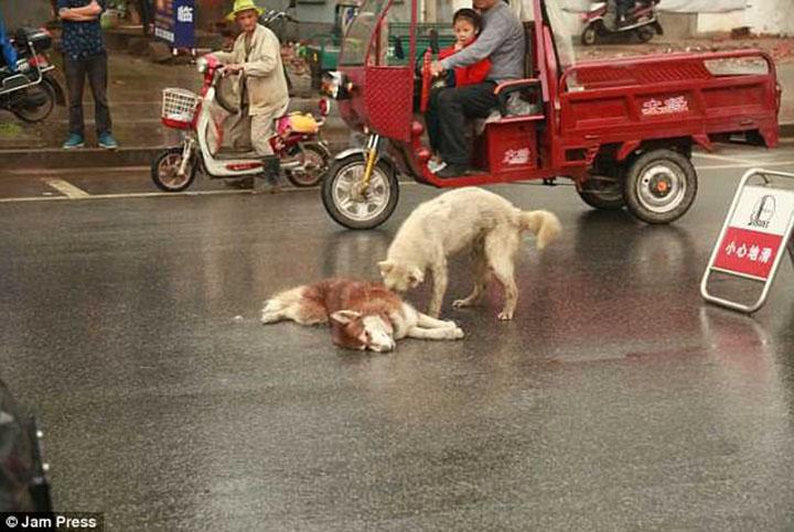 Perro fiel intenta despertar a su amigo