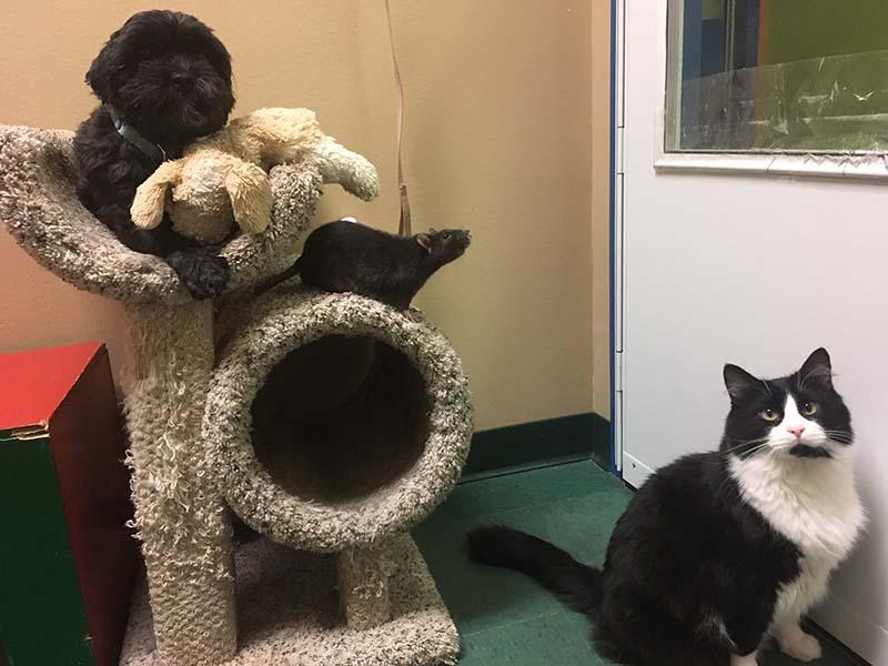 Perro, gato y rata abandonados juntos en un refugio