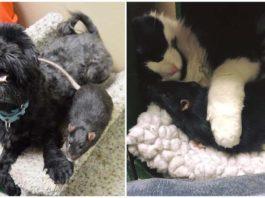 Perro, gato y rata abandonados juntos fueron adoptados