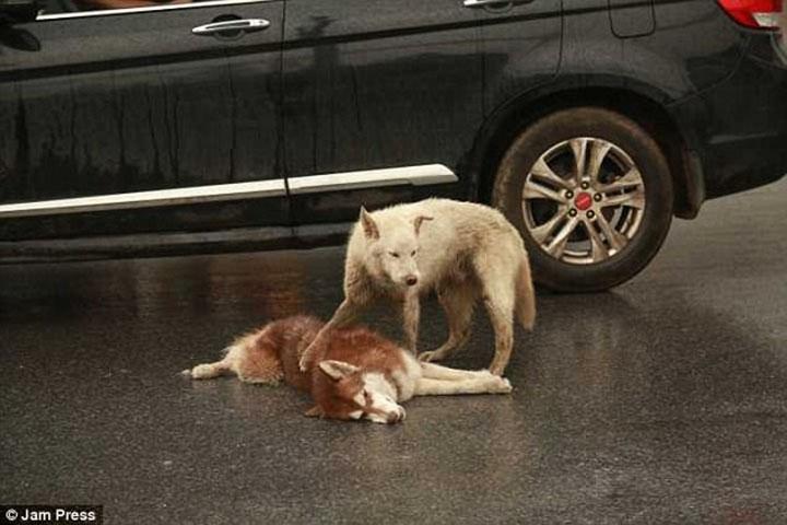 Perro intenta despertar a otro perro