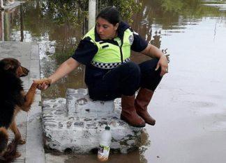 Perro invidente ayudó a rescatar personas en inundacion