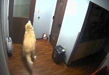 Perro se escapó de la clínica veterinaria para reencontrarse con su familia