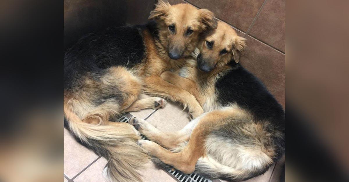 Perros se abrazaron tras ser abandonados en un refugio de alta matanza