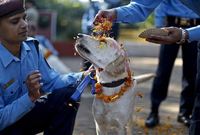 Perros son venerados en el festival Tihar