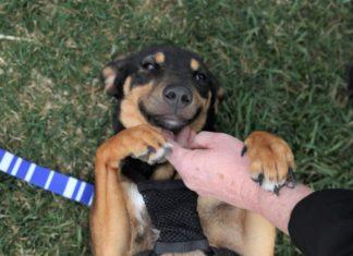Planearon rescatar 15 perros y volvieron con casi 100