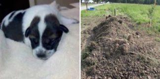 Policía rescató a un cachorro que había sido enterrado vivo en un bosque