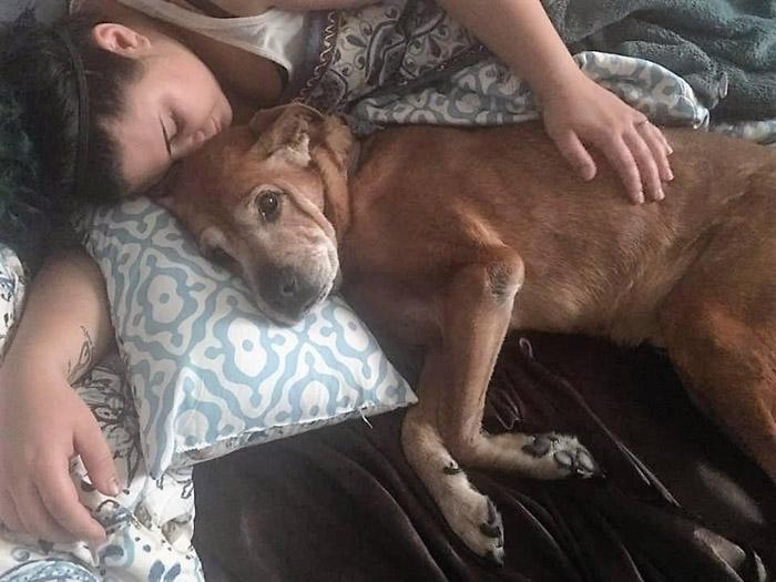 Rocky fue un gran perro
