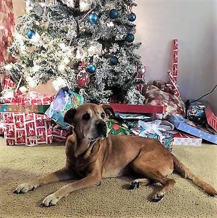 Rocky tuvo una gran navidad