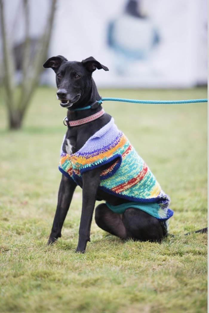 Crean suéteres para fomentar la adopción de perros