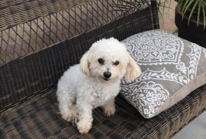 Twinkle perra rescatada