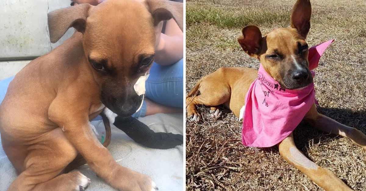Un niño recorrió dos millas buscando ayuda para su perra enferma