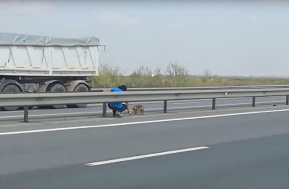 Veterianario rescata perro en la carretera