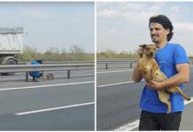 Veteriario rescata a un perro asustado en la carretera