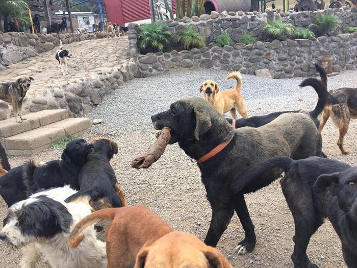 perro del territorio de zaguates