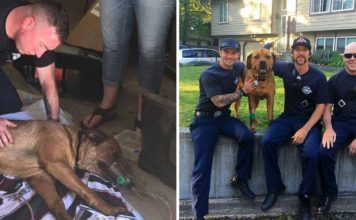 Bomberos salvaron a un perro con RCP tras rescatarlo de un incendio