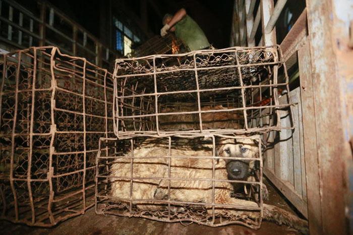 Carne de perro en China