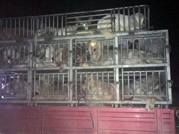Comercialización de carne de perro