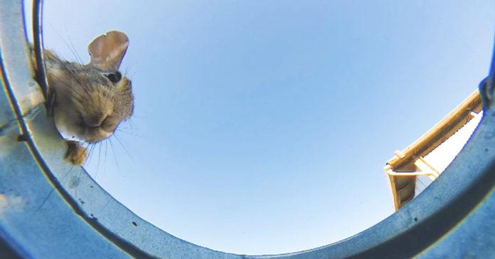 Chico cultó una cámara en una cubeta de agua y obtuvo un gran vídeo
