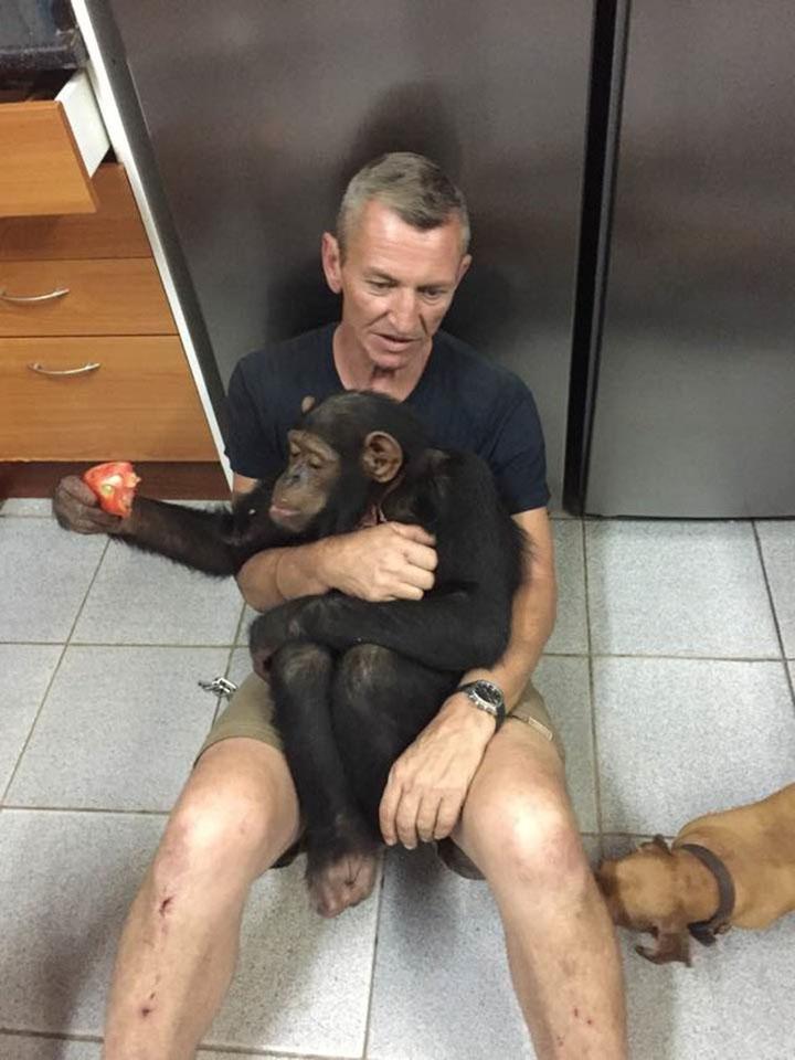 Chimpancé rescatado
