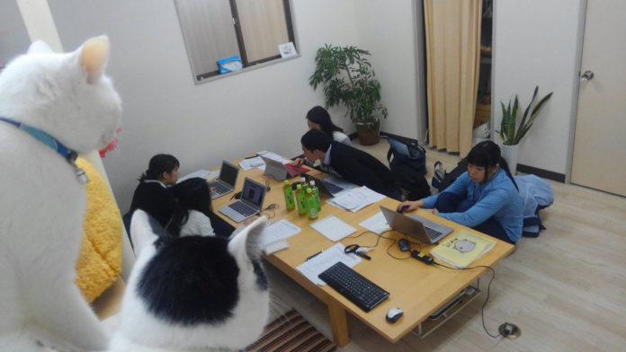 Compañía japonesa paga a sus empleados por rescatar gatos