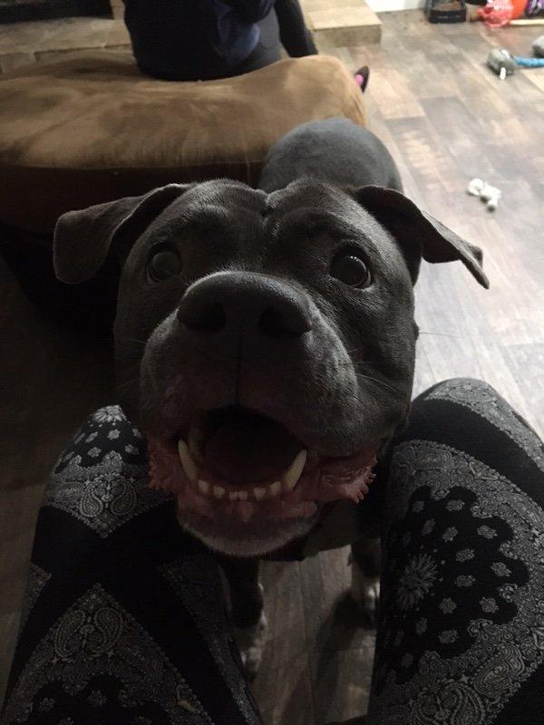 Electra adoptada