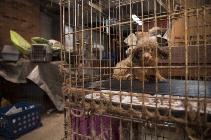 Ella permaneció encerrada en una jaula dentro de un sótano