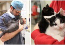 Empresa contrata personas para abrazar gatos