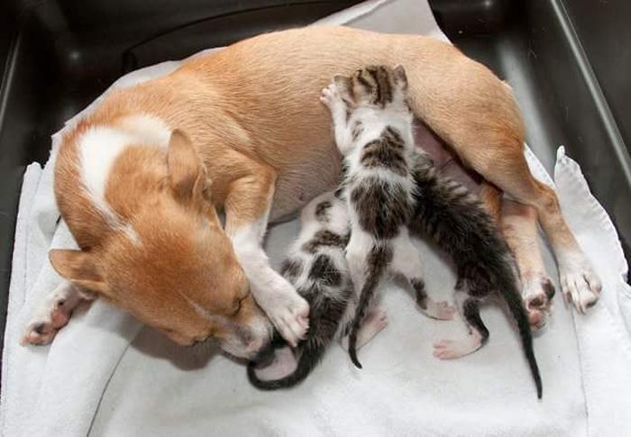 Esperanza y los gatitos