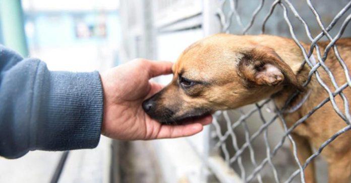 sta perra abandonada en un refugio extendió su pata a un visitante