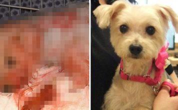 Esta perra fue apuñalada 19 veces y su recuperación ha sido increíble
