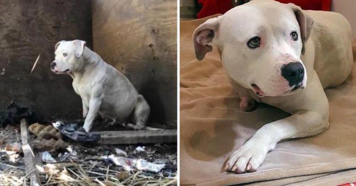 Esta perra mordió su pata para escapar tras pasar 5 años encadenada