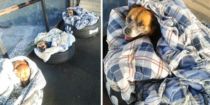 Estación de autobuses ayuda a perros sin hogar a escapar del frío