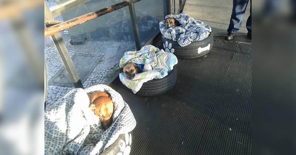 Estación de autobuses protege perros del frió
