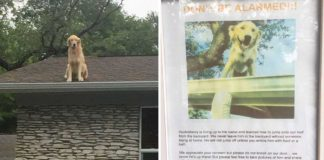 Este perro ama subir al tejado de su casa para contemplar el mundo