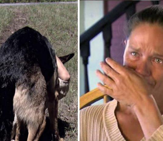 Este perro salvó la vida de una mujer tras sufrir un terrible accidente