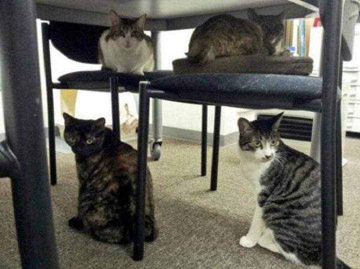 Gatos en Ferray Corporation