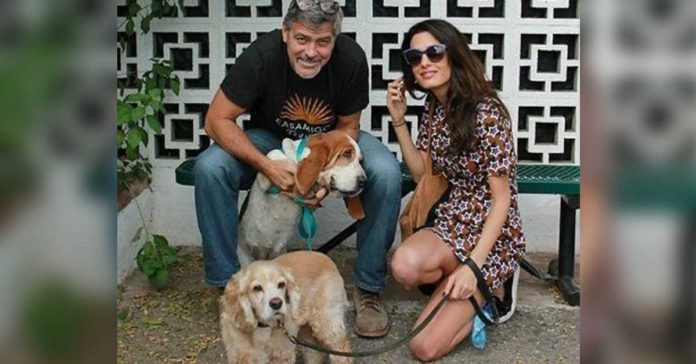 George y Amal Clooney donan $10000 a un refugio animal en California
