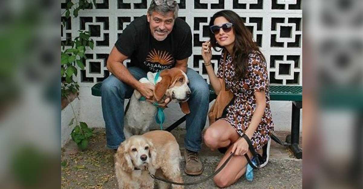 George y Amal Clooney donan $10000 a un refugio animal en California