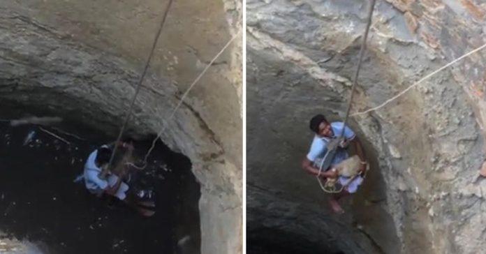 Hombre salvó a un perro que se encontraba en el fondo de un pozo